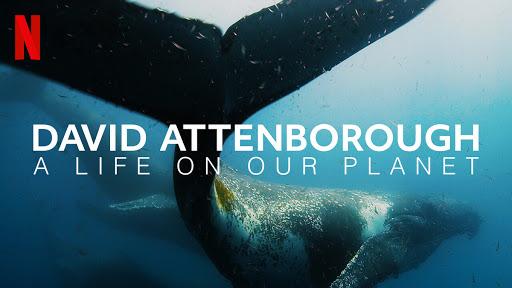 David Attenborough documentar netflix sustenabil